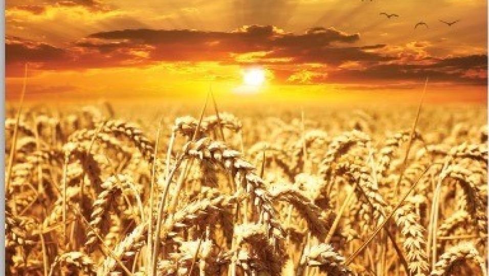 Dialogo per la valorizzazione della cultura del grano nel distretto ibleo