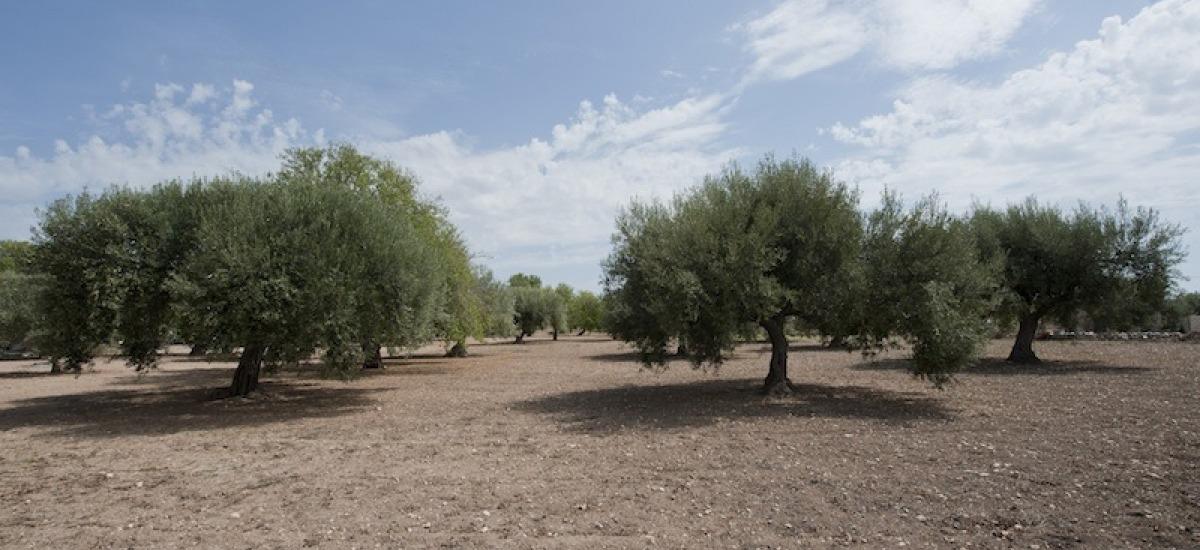 l'azienda dei Fratelli Aprile è tra le più prestigiose del settore olivicolo italiano.