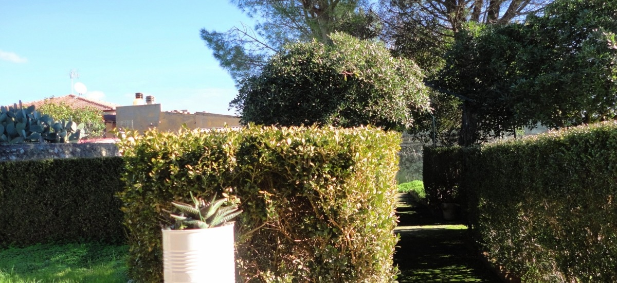 Giardino sul retro della casa
