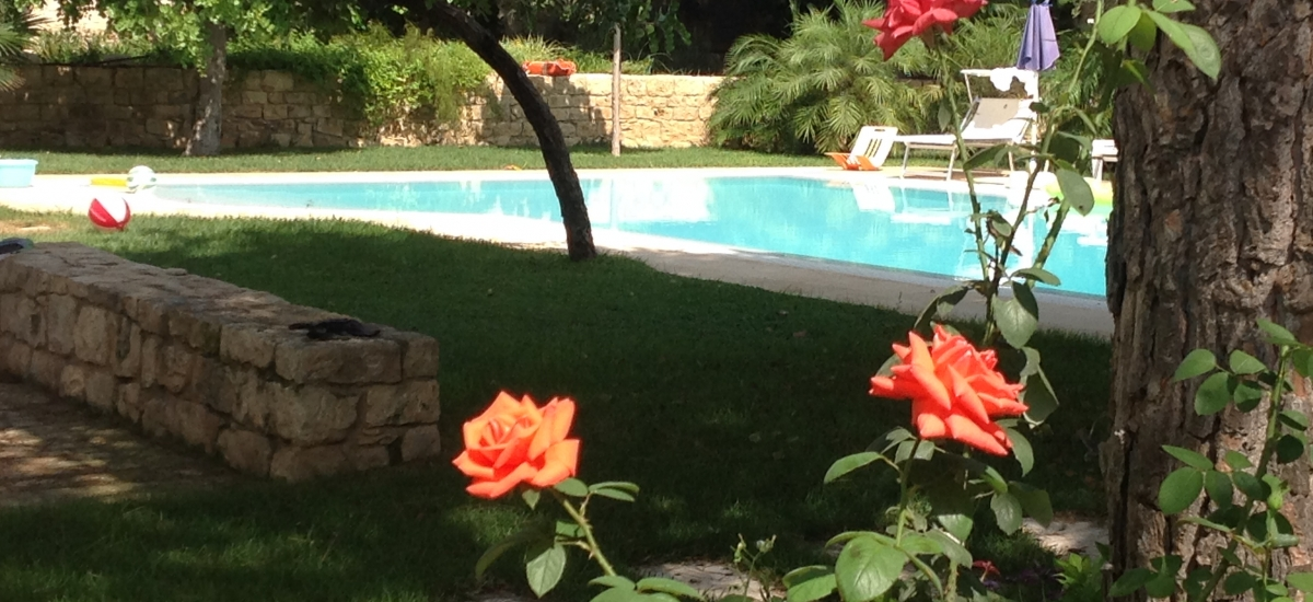 Infinity pool view and roses in the garden